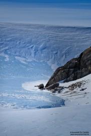 13. Pingvinane 4